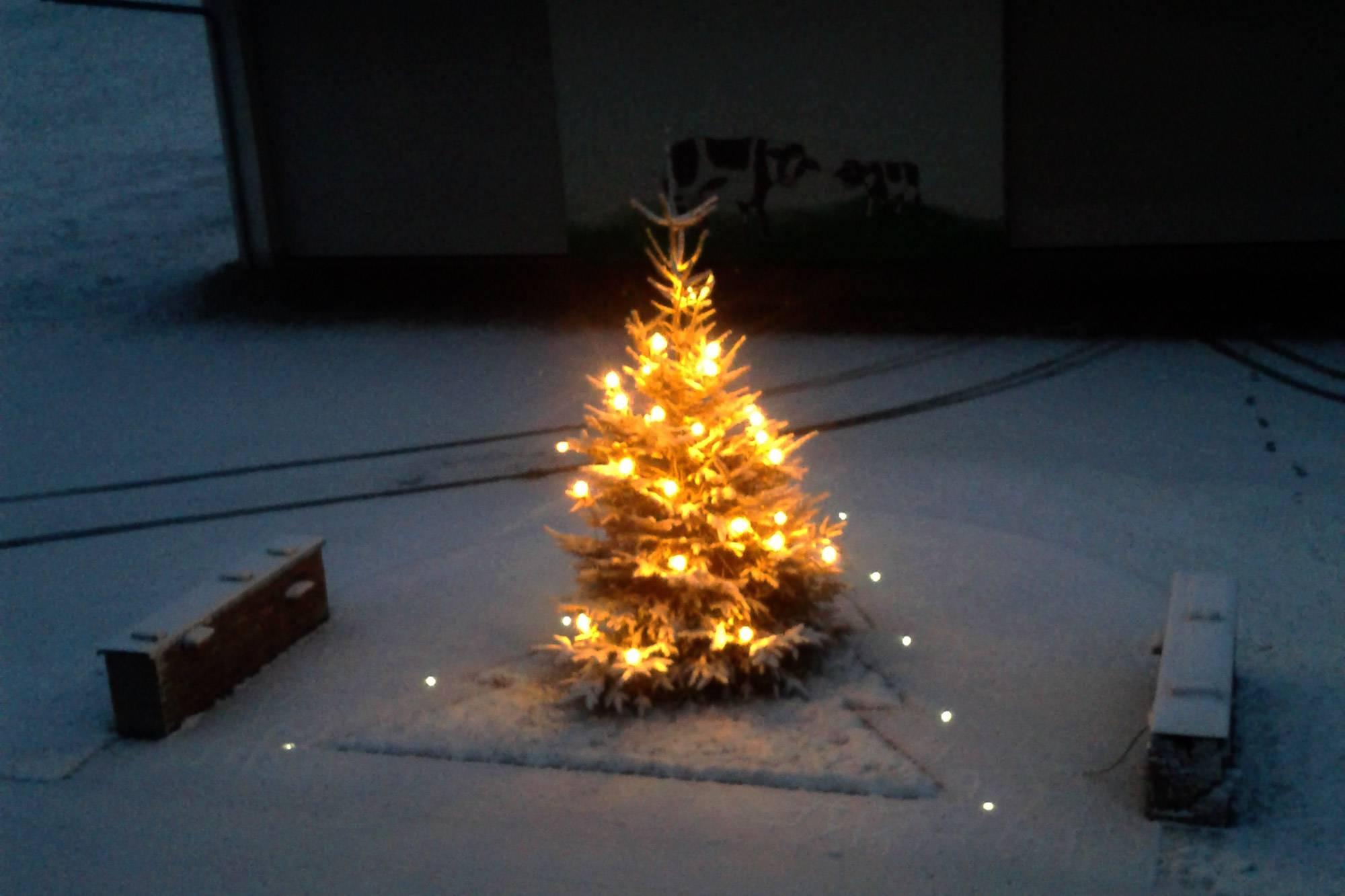 christbaum schlagen dachau
